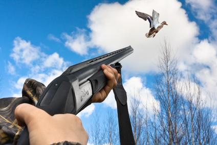 🔻 Les nouvelles règles pour la chasse au gibier d'eau en raison de l'Influenza aviaire