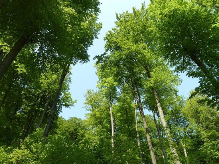 🔻Les taxes forestières française nuisent gravement à la biodiversité