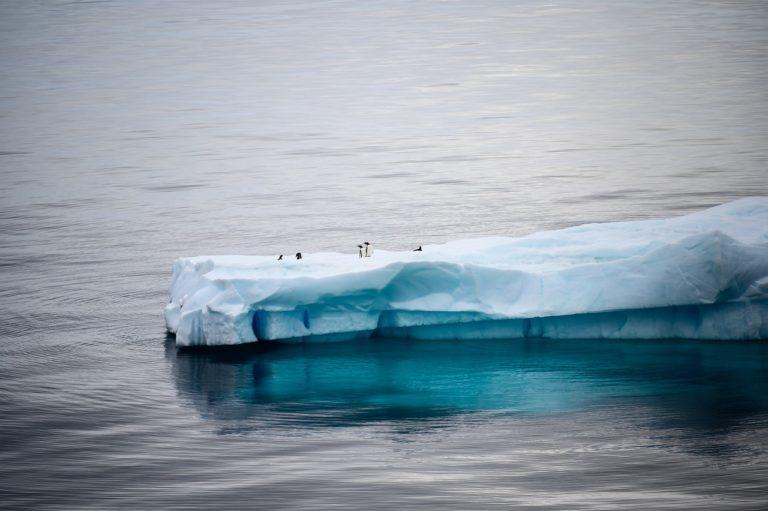 🔻Vers la création d'aires protégée en Antarctique ? Le G20 soutient trois projets