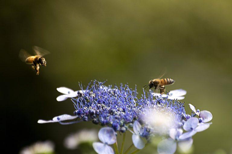 Des webinaires sur les pollinisateurs pour accompagner les collectivités