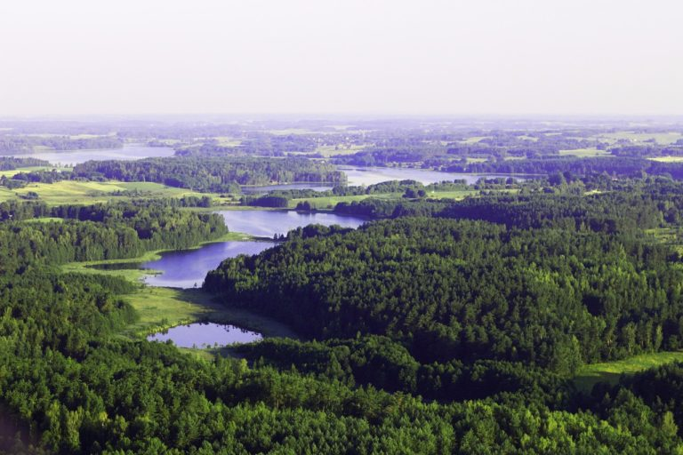 «Forêts en crise : relevons le défi » l'atelier ReGeFOr2020 100 % virtuel