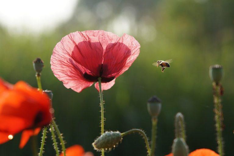 Changer nos modes de vies pour agir en faveur de la biodiversité