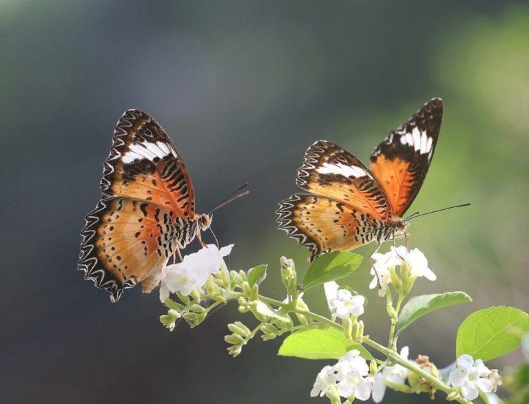 Retour sur 15 ans d'observations des papillons