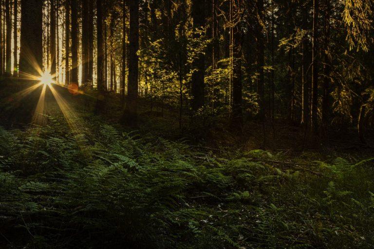 Partir à la découverte de la sylve avec le Festival « Les Nuits des Forêts »