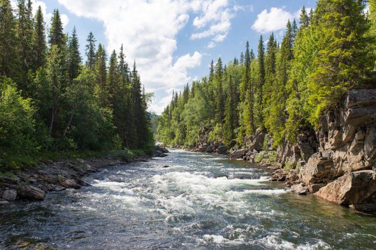 🔻Deux nouveaux appels à projets portant sur la restauration d'écosystèmes dégradés