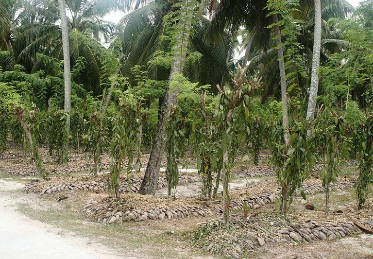 🔻 Appel à candidatures pour des cultures associées sous couvert forestier