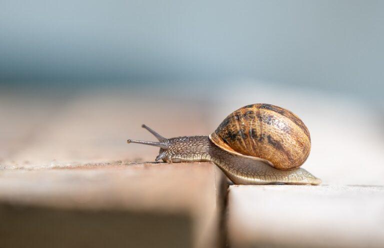 Opération escargots : une marche pour découvrir les espèces des Haus-de-France