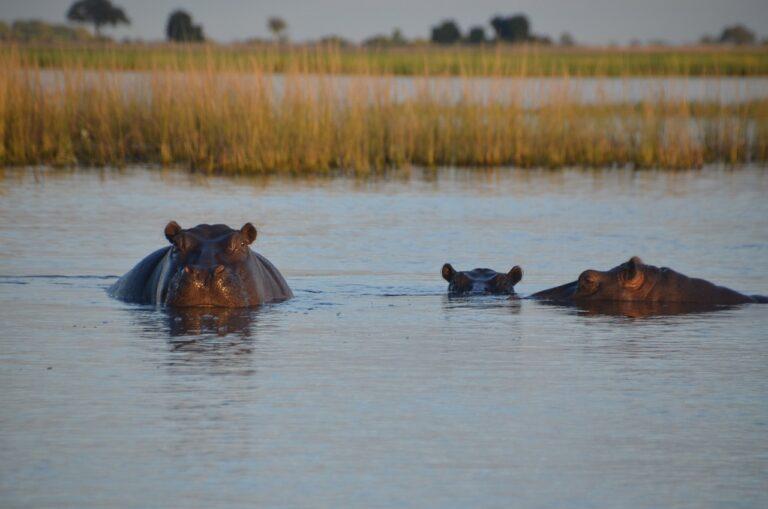 🔻L'ADN environnemental pour sauver les espèces menacées d'eau douce
