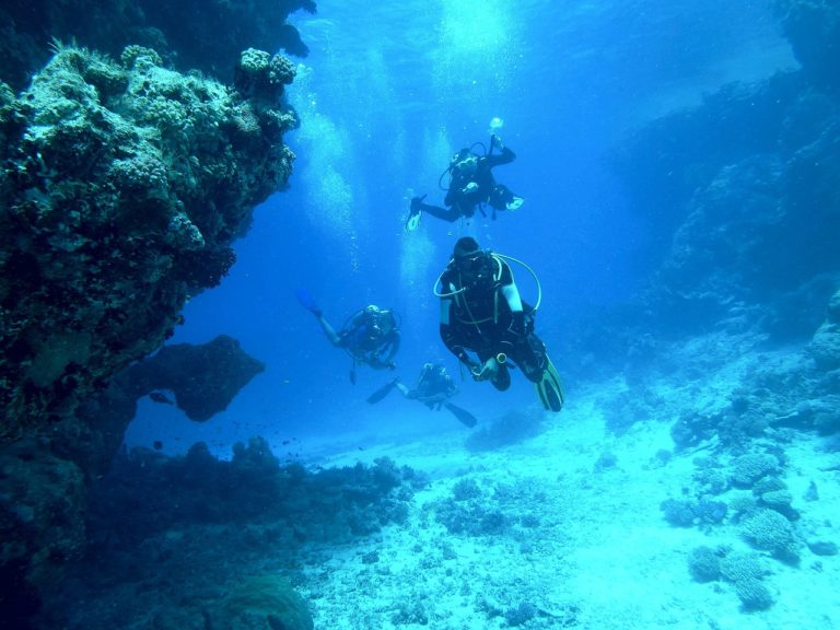 🔻Appel à manifestation d'intérêt inter-parcs naturels marins