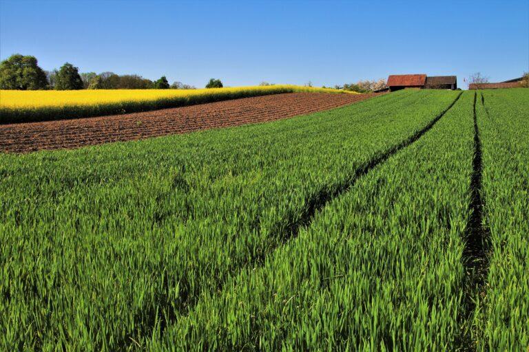 Sortie des pesticides : Hulot prend acte des annonces de Macron