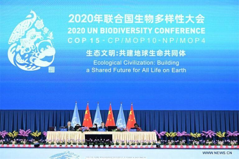 Biodiversité: adoption d'une «Déclaration de Kunming» (non contraignante…) portée par laChine