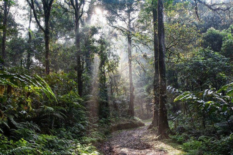 Déforestation: l'échec d'un accord majeur en Indonésie souligne l'ampleurdu défi