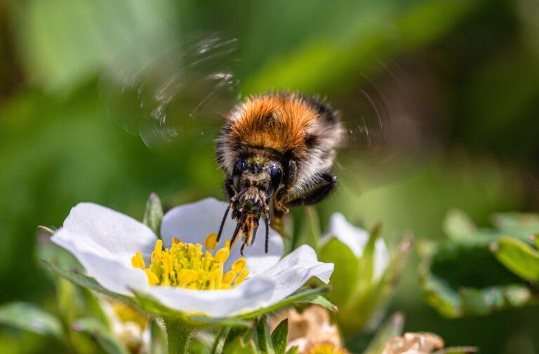 Les députés veulent faire de la protection des abeilles une «grande cause nationale» en 2022